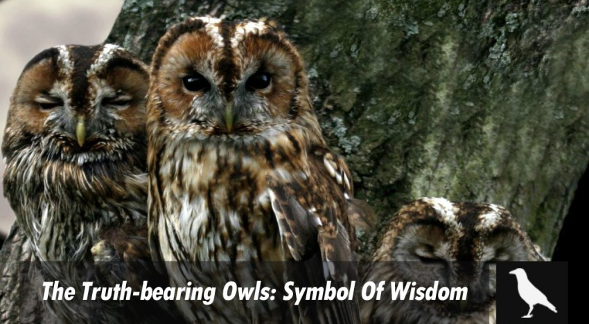 The Truth-bearing Owls: Symbol Of Wisdom