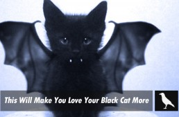 This Will Make You Love Your Black Cat More
