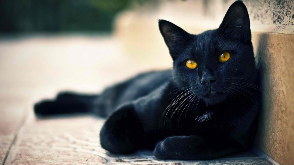 black-cat-wide-hd-wallpaper-downlaod-black-cat-images-free
