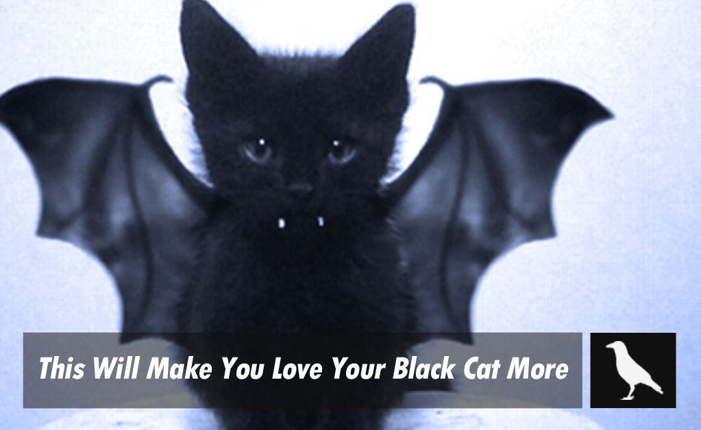 What Does A Black Cat Mean When It Crosses Your Path Best Cat