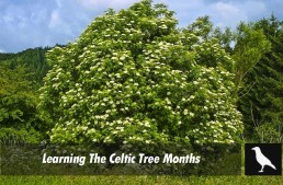 Learning The Celtic Tree Months